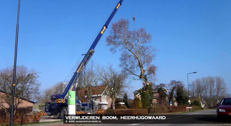 Verwijderen boom, Heerhugowaard