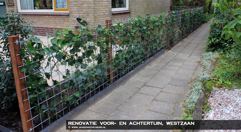 Groene Afscheiding Tuin : Renovatie voor en achtertuin westzaan jansen hoveniers