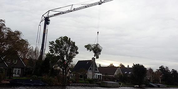 http://www.jansenhoveniers.nl/wp-content/uploads/2013/01/header-boomverzorging-570-285-02.jpg